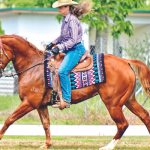 Riders shine at Western Dressage Show in Innisfail